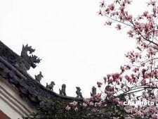 禅宗三祖僧璨大师的故事